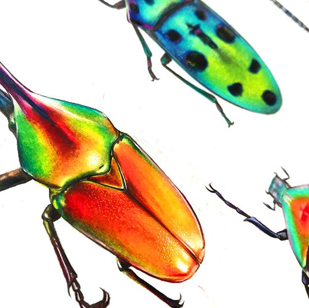 portfolio_textile_design_escarabajos